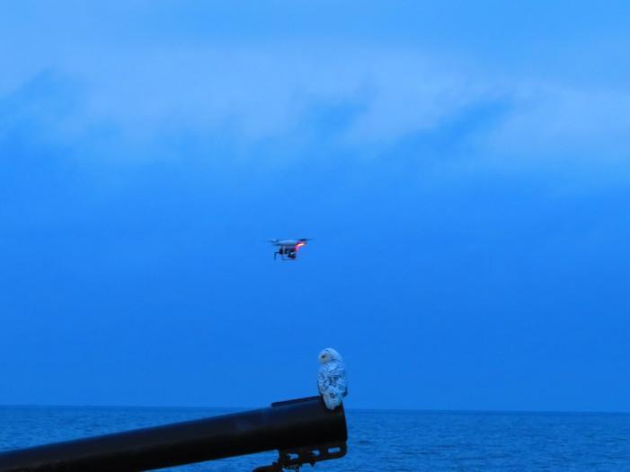 Snowy_Owl_Quadcopter